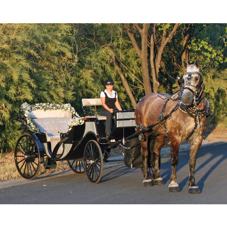 Angeli Carriages - Austin TX Wedding Transportation Photo 13