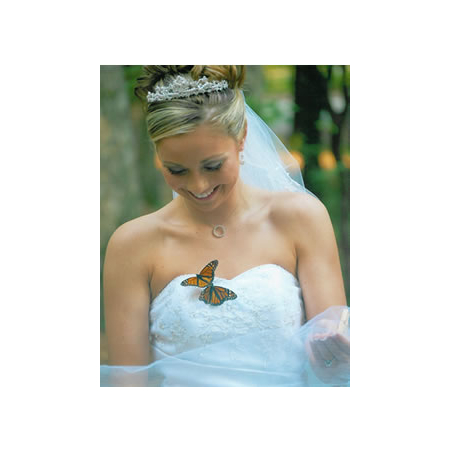 Reynolds Treasures - North Charleston SC Wedding Officiant / Clergy Photo 5