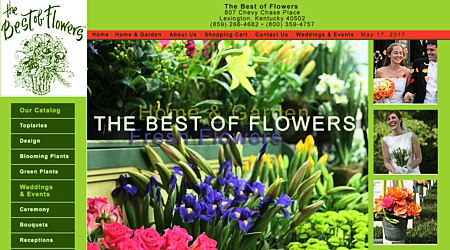 Best of Flowers